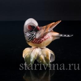 Статуэтка птицы из фарфора Амадина, Hutschenreuther, Германия.