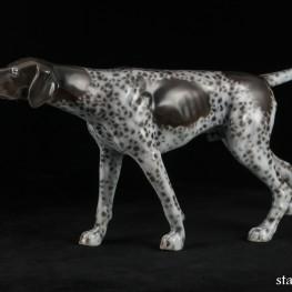 Охотничья собака, курцхаар, Rosenthal, Германия
